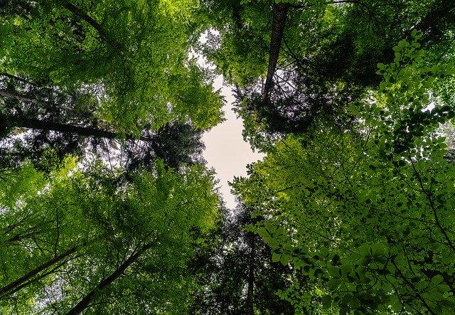 Erdőben az eget nézve